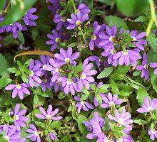 Purple flowers by Sleeva
