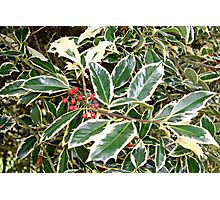 """""""Holly"""" Photographic Print"""