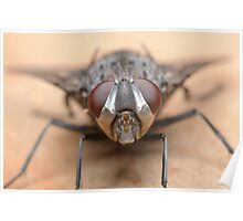Tachinid Fly Poster