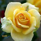 Sunshine Flower by Zachary Matney