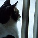 Watching and waiting by Tracy Jule