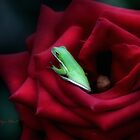A Little Bed of Roses by Carolyn Staut