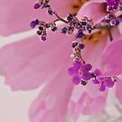 Macro And Closeup Photography Calender by Sandra Foster