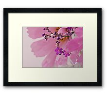 Statice Macro With Cosmo Background Framed Print