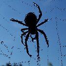 Spider Spa by funkyfacestudio