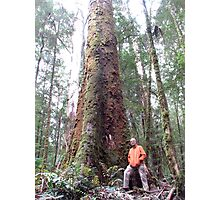Big Tree, Otway National Park Photographic Print