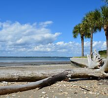 Driftwood on Hilton Head Beach by lookherelucy