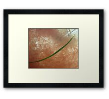 Spotted Pipefish. Framed Print