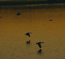 Ducks in Flight by TheBigK