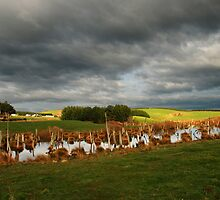 Farmland, Duntroon, NZ by AlisonOneL