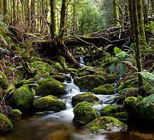Taggerty River by Mark Jones