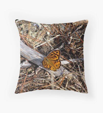 Male Heteronympha Merope  Throw Pillow