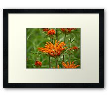 Red, Green and Orange Framed Print