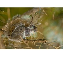 Gray Squirrel Photographic Print
