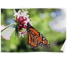 Monarch Flower Poster