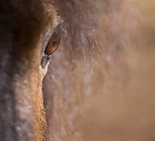 Equine #1 by JimFilmer