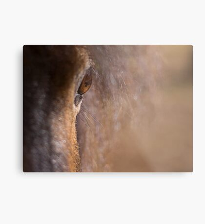 Equine #1 Metal Print
