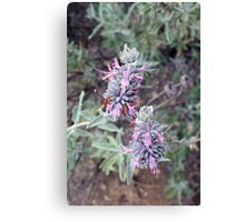 Softly Sage Canvas Print