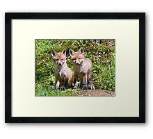Fox cubs Framed Print