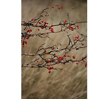 Autumnal Impression Photographic Print