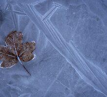 Frozen Leaf On Ice by pusztafia
