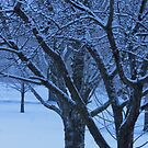 Winter Trees by lorilee