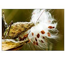 Pods Photographic Print