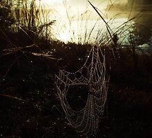 Morning Web by LightItUp