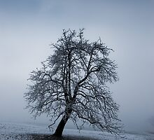 moody tree by peterwey