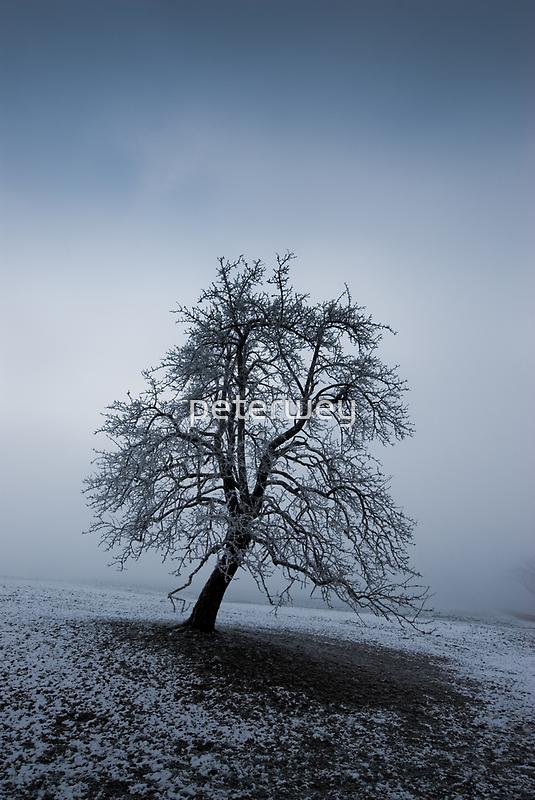 moody tree by peterwey