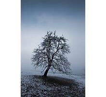 moody tree Photographic Print