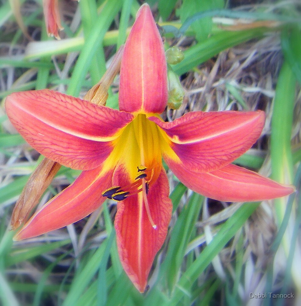 Pink Flower by Debbi Tannock
