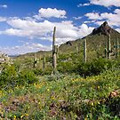 Picacho Peak State Park by Barbara Manis