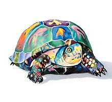 The Candy Turtle Photographic Print