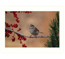 White-Throated Sparrow (Zonotrichia albicollis) Art Print