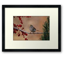 White-Throated Sparrow (Zonotrichia albicollis) Framed Print