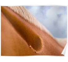 Equine #2 Poster
