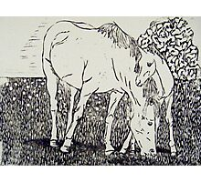 Mare and Foal I Photographic Print