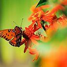 Orange Bird by Donna Adamski