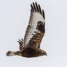 Dark Morph In Flight by Thomas Young