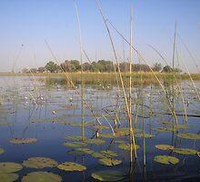 Lilies of the Okavango by Jan  Saggers