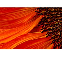 Sunburst Photographic Print
