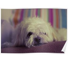 Lazy Pooch Poster