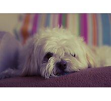 Lazy Pooch Photographic Print