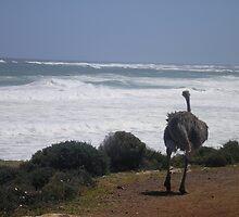 Ostrich Gazing by Jan  Saggers