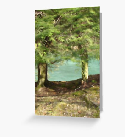 Audra State Park, West Virginia Tree Greeting Card