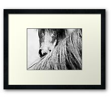 Equine #3 Framed Print