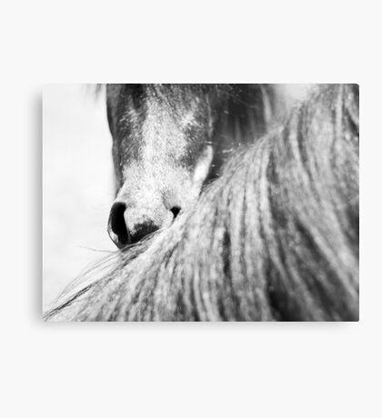 Equine #3 Metal Print