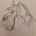 Knopa – Scottish Terrier (Crufts Best in Show) by BonniePortraits