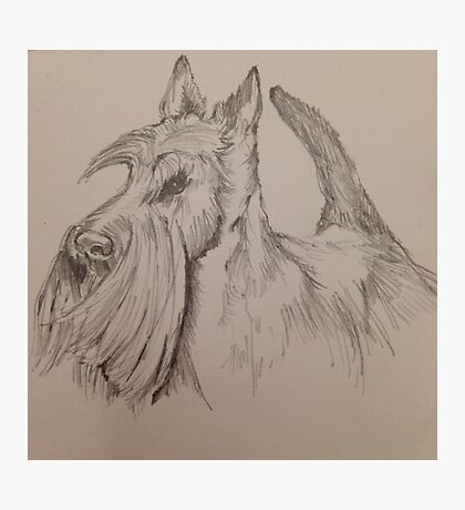 Knopa – Scottish Terrier (Crufts Best in Show) Photographic Print